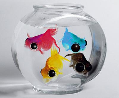 Fische symbolisiert Offsetdruck CMYK