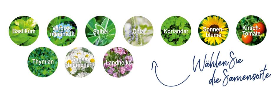 Übersicht Farben und Samensorten für Buntstift Sprout